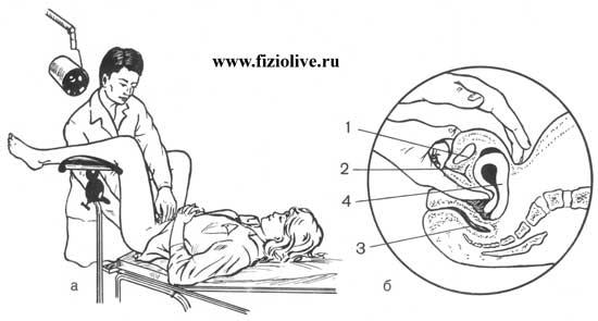 Общая схема гинекологического
