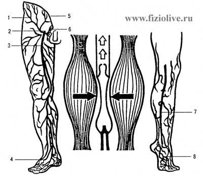 подкожной вены ноги;
