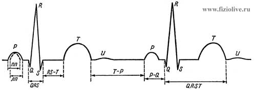 Схема нормальной электрокардиограммы.