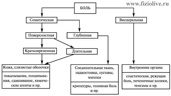 Kлассификация различных видов