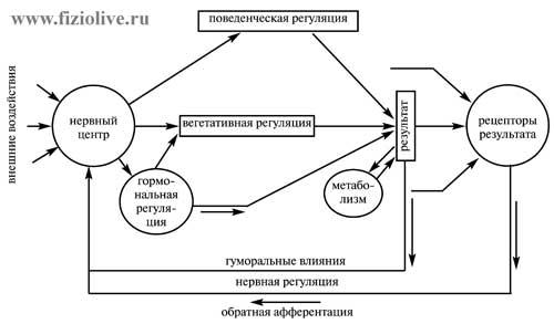 Функциональная система по П.K.