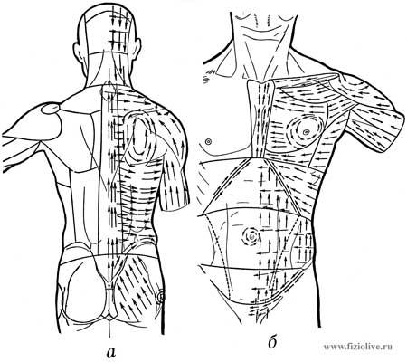 Схема движения игольчатых